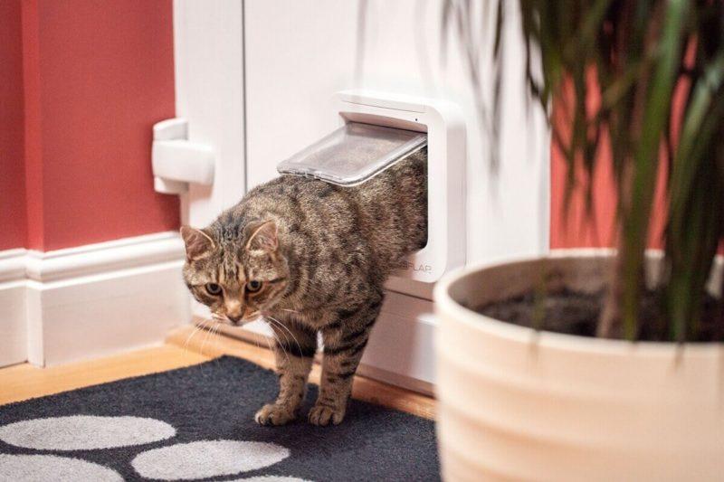 chatière connectée sureflap