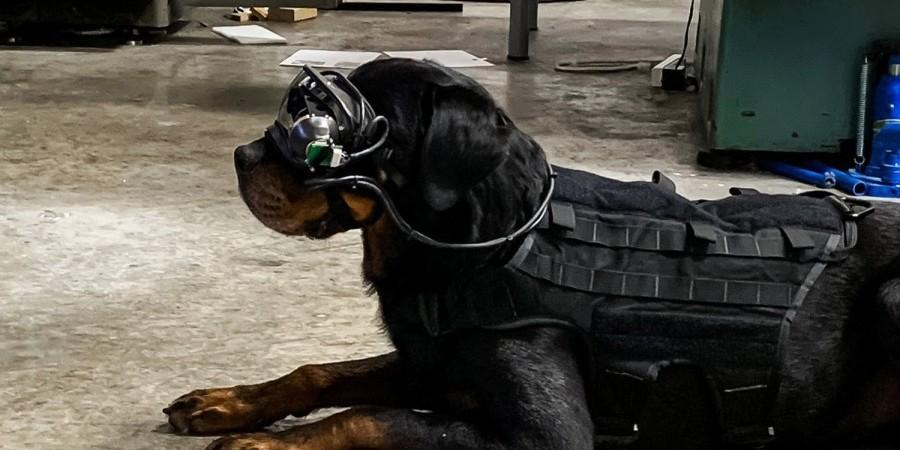 chien militaire porte lunettes de réalité augmentée